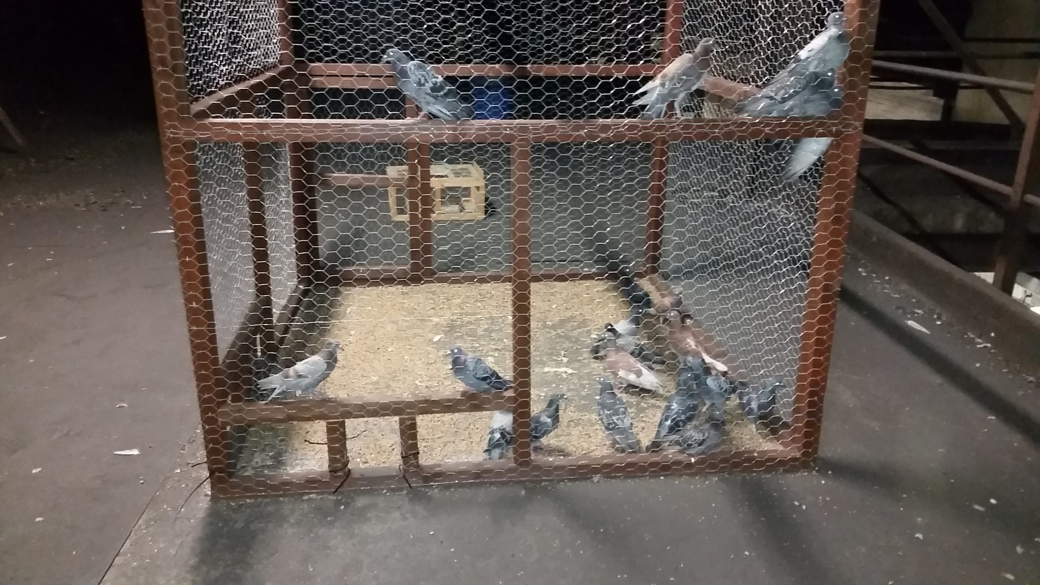 Humane trapping Of Bird Pests